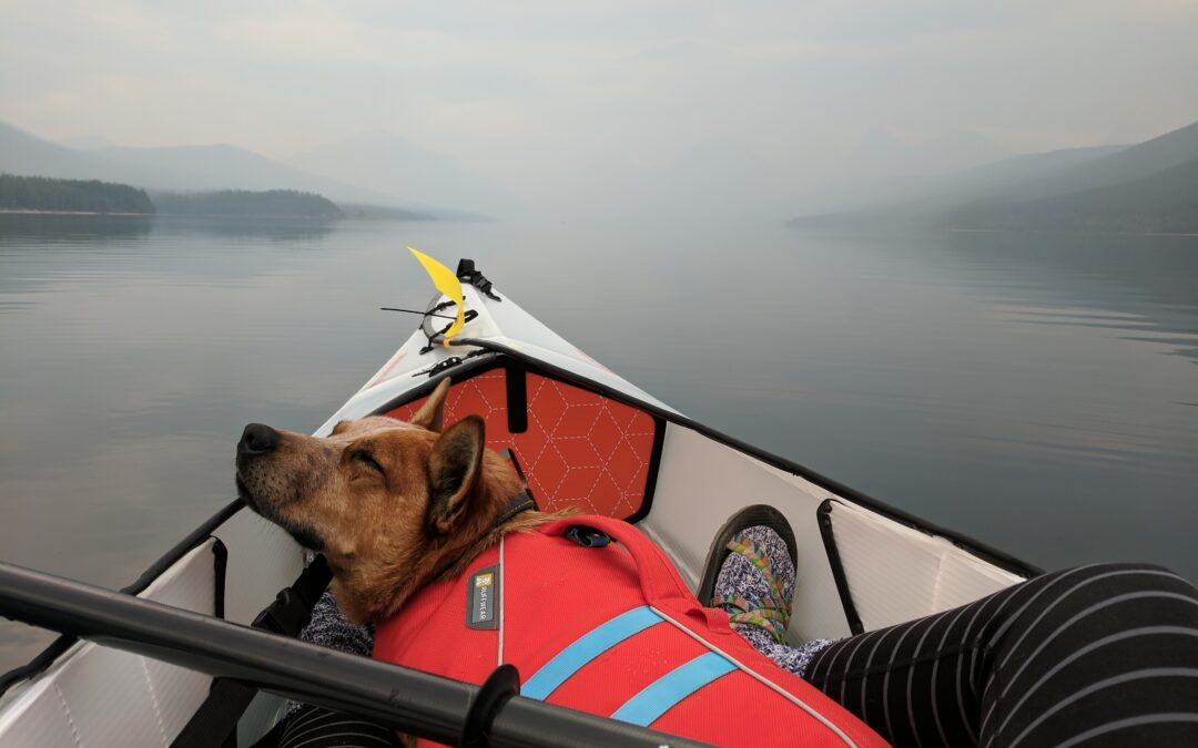 Kayaking with your dogs