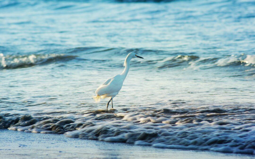 Best Kayak for Bird Photography